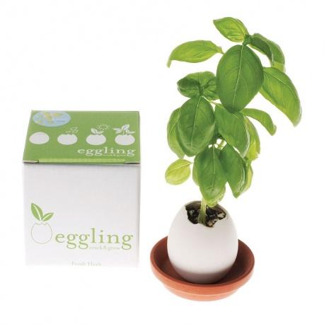 eggling BASiLiC