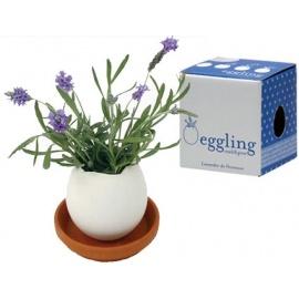 eggling LAVANdE